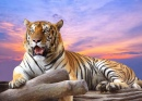 Tigre no Por do Sol