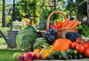 Basket of Vegetables and Fruits