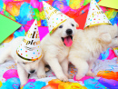 Party Puppies