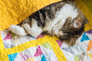Tabby Cat Wrapped up in Quilt Cover